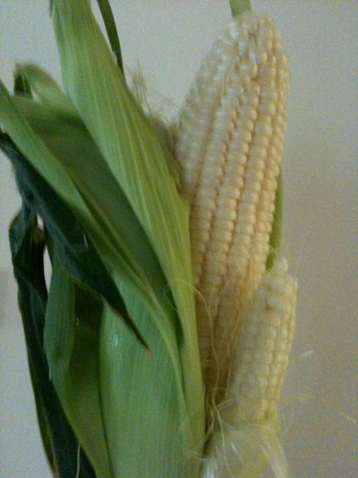 mutant-corn